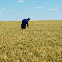 2019 GIAV Crop Tour – Sponsored by Perkins & Co Resources